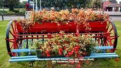 Antique seed drill with flowers near bus station 24th September 2016 002 (D@viD_2.011) Tags: antique seed drill with flowers near bus station back 24th september 2016