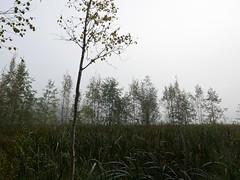 Fog (jiihaa) Tags: lx100 finland landscape fog