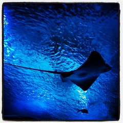 upload (ChiMacPh) Tags: valencia square lofi acquarium squareformat iphoneography instagramapp uploaded:by=instagram