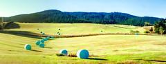 Hay bales, Clarendon, Otago, New Zealand (brian nz) Tags: newzealand rural farm pasture otago hay milton bales haybales haymaking