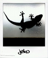 "my name is ""Jekò"" (antoniodapisa) Tags: animali controluce jeko"