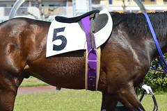 20130405-_DSC5286 (Fomal Haut) Tags: horse japan nikon nagoya 80400mm d4   14teleconverter  d800e