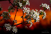 Spring Has Arrived in KY (JGo9) Tags: