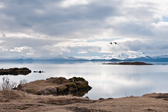 Brighter days (Kristin Sig) Tags: nature birds iceland ingvellir brighter nesjavellir ingvallavatn