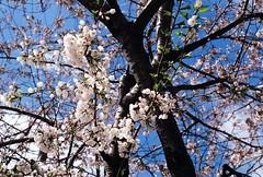 Spring has sprung (aaronvandorn) Tags: jerseycity rokkor