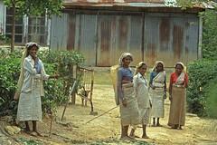 Friendly tea pickers (Rob de Hero) Tags: film analog tea ella slide dia srilanka pickers teapickers teepflcker