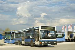 Im Sonnenlicht präsentiert sich der Museums-NL202 an der Messe (Frederik Buchleitner) Tags: man bus munich münchen shuttle messe omnibus shuttlebus bauma 4858 ocm messemünchen nl202 omnibusclub omnibusclubmünchenev