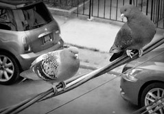 """hey baby"" (Robert S. Photography) Tags: bw window pigeons powerlines"