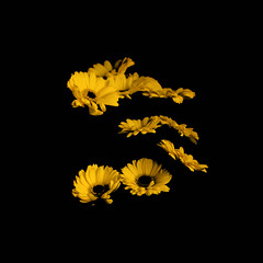 Fade to black (MSC photo) Tags: flowers black yellow spring fade gerberas