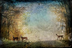 Why Did the Deer Cross the Road? (Passion4Nature) Tags: road rural dusk deer textures ie whitetaildeer southwestmichigan moonseclipse memoriesbook magicartoftextures artistictreasurechest magicunicornverybest magicunicornmasterpiece magicuniversemasterpieces exoticimage