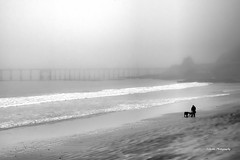 Avila Beach man and dogs (stephencurtin) Tags: ocean california blackandwhite usa man beach dogs pier sand waves avila unanimous thechallengefactory