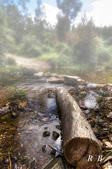 Mistery fog (RBXposure) Tags: wood water wideangle tokina hdr treelog 1116mm
