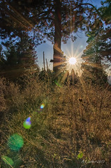 Evening Walk (SimplyAmy74) Tags: nature sunshine evening sundown walk idaho lensflare naturewalk postfalls