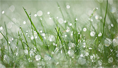 (Ana Lukascuk) Tags: reflection green water grass rain bokeh drop dew