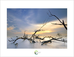 ::SkyBlue:: (Green.Boy) Tags: longexposure sunset tree beach nikon sigma malaysia outing manfrotto outin leefilter gnd09 pantaikelanang d300s