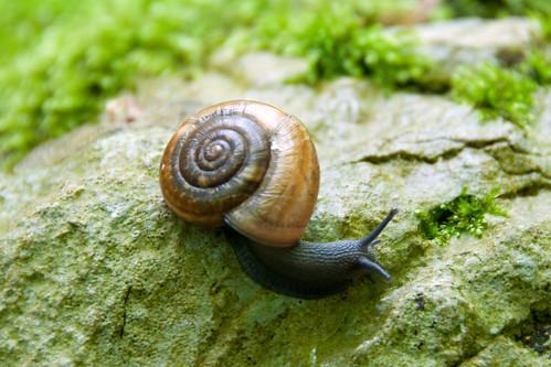 unidentified snail