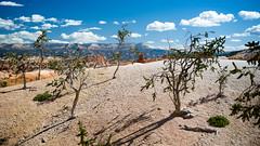 Sun and shadows at Bryce Canyon NP, Utah (kirilko) Tags: brycecanyonnp brycecanyon utah shadows fujix100 fujifixepixx100 finepixx100 clouds hoodoo usa