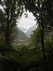 Explorations  (Gabbie98) Tags: framing frame jungle winter must woods rainforest forest trees mountains glacier icecaps newzealand