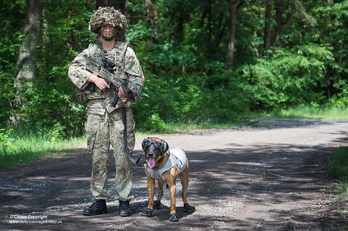 Zafari, from 102 Military Working Dogs Sqn