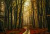 Golden leaf forest (larsvandegoor.com) Tags: autumn curved fall forest holland landscape larsvandegoor leaves nature path road thenetherlands trees wood opp