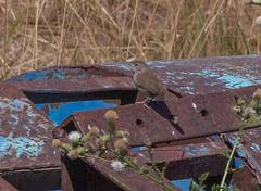 Palouse bird (zen granny) Tags: palouse washington
