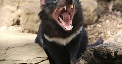 Pinned to Animals Travel on Pinterest (TheTravelTart) Tags: pinterest animals travel
