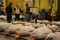 tsukiji-11 (winnieyklai) Tags: tsukiji fish fishmarket market tokyo japan seafood tuna auction tunaauction frozentuna