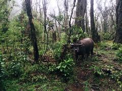 IMG_9128 (Seif Sallam) Tags: travel vietnam sapa fansipan hiking trekking