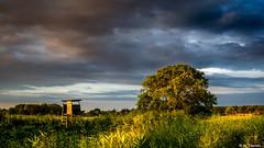 Ueckermnder Heide (Codex IV) Tags: blau blue gelb green himmel land landscape landschaft red rot sky sonnenaufgang sunrise uckermark yellow ueckermnder heide wolken clouds baum tree hochsitz