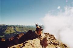 . (Careless Edition) Tags: photography film mountain nature italy southtyrol sdtirol goats kolbner kolben