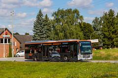 VHH 1336   Hamburg, Neuengammer Hausdeich (torbensimon) Tags: vhh verkehrsbetriebehamburgholsteingmbh hamburg holstein vierundmarschlanden elbdeich deich hauptdeich elbe mercedesbenz citarolem 1336 linie 227 bfbergedorf bus linienbus schnellbus stadtbus evobus mitzieher