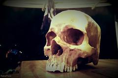 skull I (VintageReflection) Tags: pirate ship   tivoli copenhagen 2016 retrotwin lostillusion75 kopenhagen schdel totenkopf night decoration dekoration bone skeleton calavera