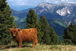 Maurerberg Wanderung (2) - Südtirol
