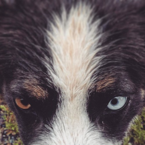 #dog #eyes #ontheroad #birdviewpicture #makanart #lovenature #meditation #swissalps #mountains