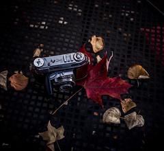 Kodak Retina III c (Janey Song) Tags: kodakretinaiiic oldfilmcamera stilllife table leaves autumn leicamtyp240 leitzwetzlarsummaron35mmf28year1958