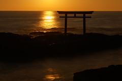 Golden belt (t.kunikuni) Tags: jp             japan ibaraki ibarakiken oarai oaraimachi oaraiisomaejinjashrine oaraicoast pacificocean torii sea ocean sunrise dawn