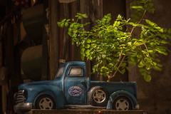 Mini truck and tree..;) (Jims_photos) Tags: antiquecar wimberleytexas texas outdoor outside oldmemories oldcar adobelightroom adobephotoshop shadows sunnyday daytime jimallen lightroom nopeople