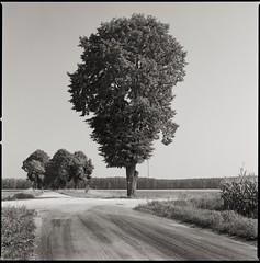 Untitled (9) (fzdp) Tags: hasselblad 8028 ilford delta 100 ilfotec ddx 16 hoyaorangeg