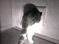 20161019-075206-o-1 (Catflap central) Tags: cat catdoor katzenklappe raspberry pi camera cats catflap kattenluik catflapj2nnl pet meow