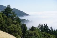 Mount Tamalpais: Rock Spring to Stinson Beach Hike (15) (Planet Q) Tags: mttam marinheadlands