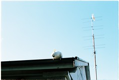 (tayn3) Tags: olympus om2n 35mm australia analog portra film kodak portra160 cockatoo roof aerial oz