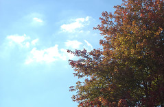Fall (Michael Daum) Tags: nikon d1h nikkor 50mmf18af tree leaves sky fall