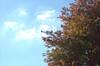 Fall (Michael Daum) Tags: nikon d1h nikkor 50mmf18af tree leaves sky fall