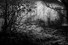 Into The Woods (VidarFoto) Tags: 50mm fog forest leica leicam9 m9 norway summicron summicron50mm bw