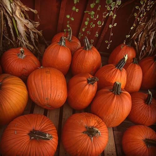#Halloween soon :) #pumpkin