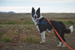 28august_Hringur&Venus_lastPlay_078 (Stefn H. Kristinsson) Tags: hringur venus august 2016 play leikur last reykjanes patterson iceland sland