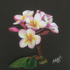 Flowers from my garden (da's art) Tags: drawingonblackpaper luminance polychromos flower coloredpencils drawing artwork traditionalart