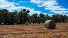 Roll 'em Up - Move 'em Out (TuthFaree - on vacation) Tags: 7dwf elements rural farm country ga swga georgia peanuts soil dirt orange