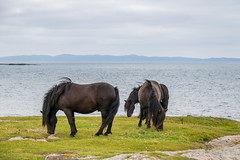 Horses (Infomastern) Tags: hallandsvder vdern animal djur horse hst exif:model=canoneos760d geocountry camera:make=canon exif:isospeed=100 camera:model=canoneos760d exif:focallength=70mm geostate geolocation exif:lens=efs18200mmf3556is geocity exif:aperture=63 exif:make=canon