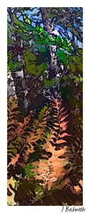 image (Judy Beckwith) Tags: ferns trees autumn nature schoodic maine original pastel digitally altered i colorama
